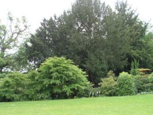 Parkland garden
